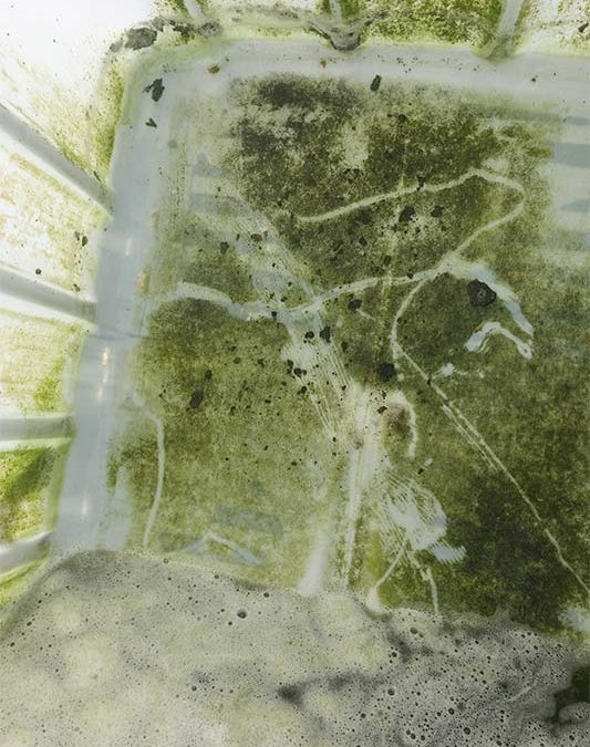 Algae in water- What is green water?